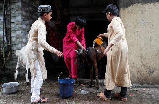 الأولاد يغسلون ماعز قبل ذبحه خلال عطلة عيد الأضحى في مومباي