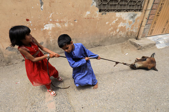 أطفال يسحبون رأس بقرة على طول شارع بحبل ، بعد ذبح احتفالاً بعيد الأضحى ، مع استمرار جائحة فيروس كورونا (COVID-19) في بيشاور