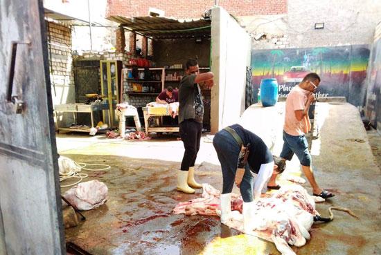 المحافظات تلاحق مخالفات الذبح فى عيد الأضحى (8)