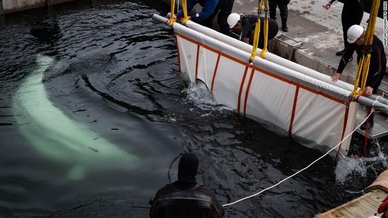 لحظة انزال الحيتان فى البحيرة