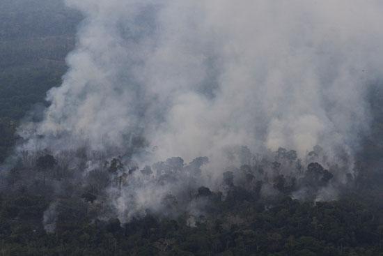 الدخان يخرج من أشجار الأمازون