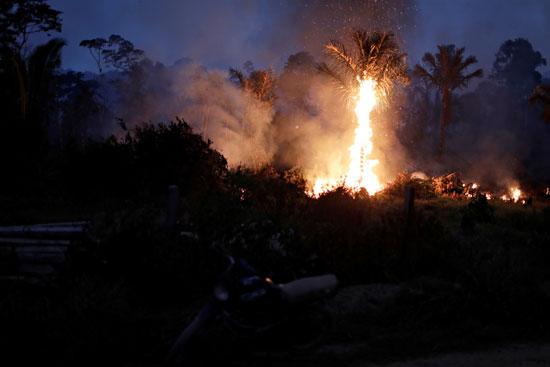 النيران تلتهم نخلة
