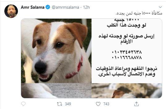 عمر و سلامة تويتر