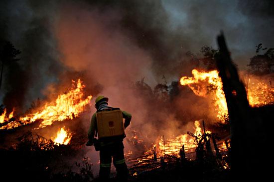 النيران تلتهم الاشجار