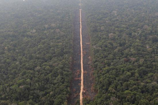 تشابك الاشجار فى غابات الامازون