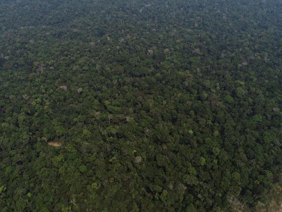 أشجار غابات الامازون