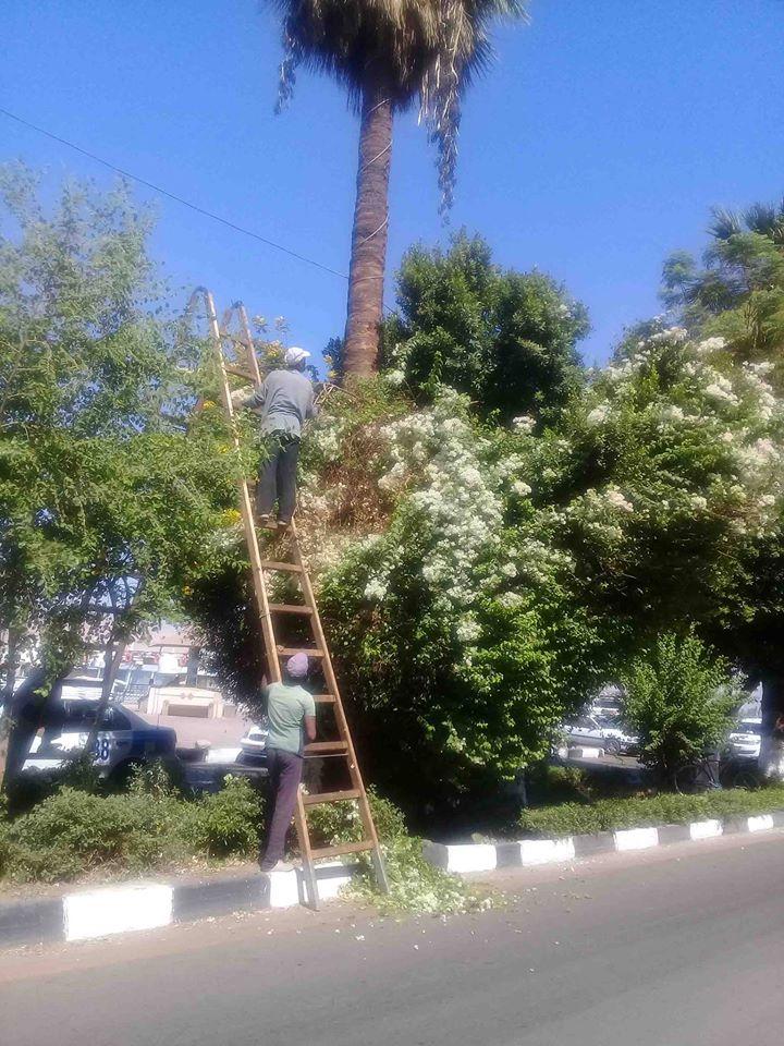 المسارات السياحية المؤدية إلى مقابر وادى الملوك والملكات ومعبد حتشبسوت (19)