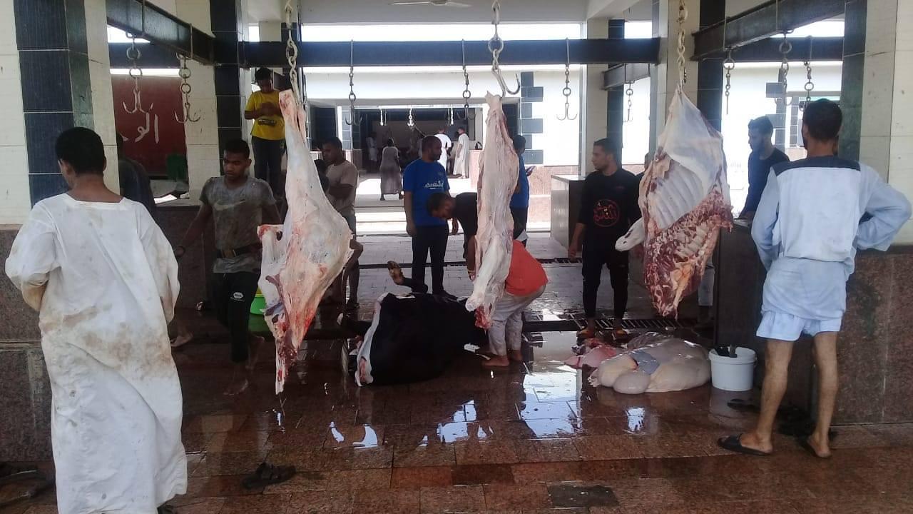 مجزر ابو وير بكوم امبو يستقبل اضاحي  الجمعيات  (9)