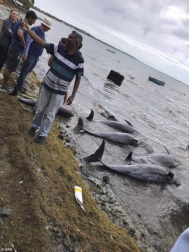 الدلافين النافقة على ساحل موريشيوس