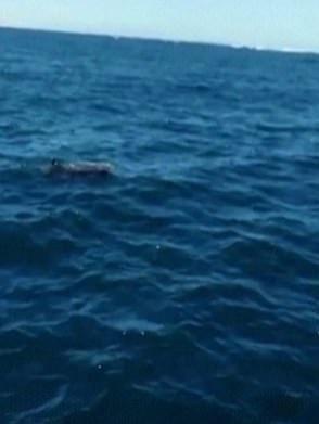 الدلافين بعد نفوقها