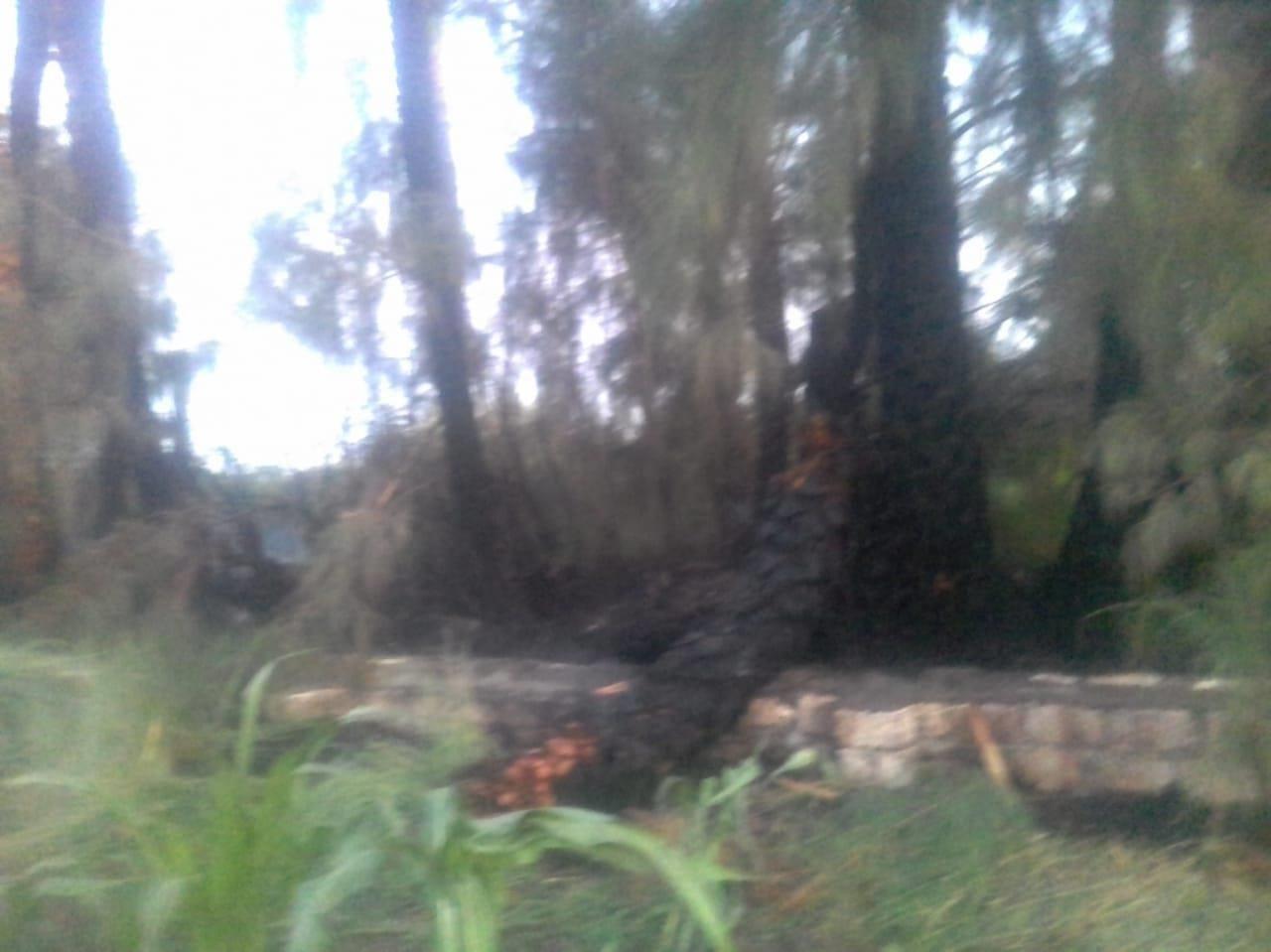 حريق يلتهم 20 فدان  نخيل وأشجار بأسيوط  (3)