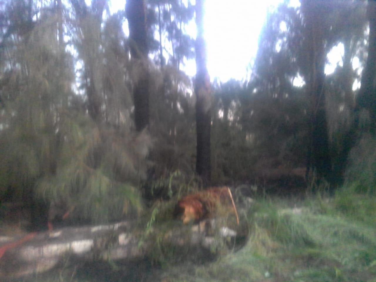 حريق يلتهم 20 فدان  نخيل وأشجار بأسيوط  (1)