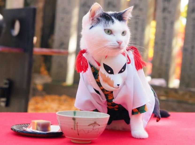 زي لقط مستوحى من أنيمى يابانى