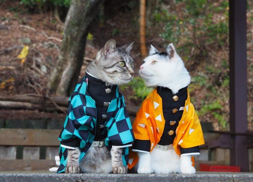 أزياء أنيقة للقطط
