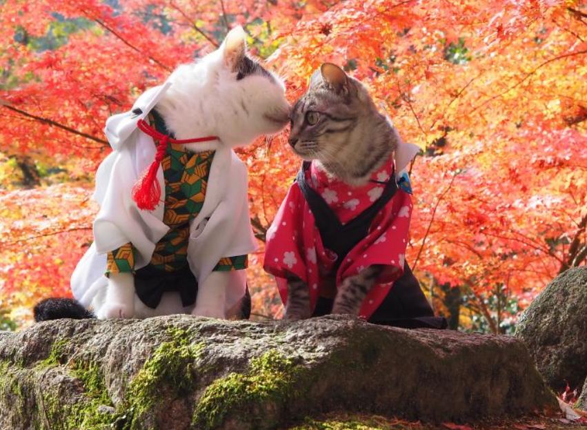 أزياء القطط