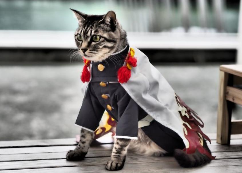 قط فى أزياء مميزة