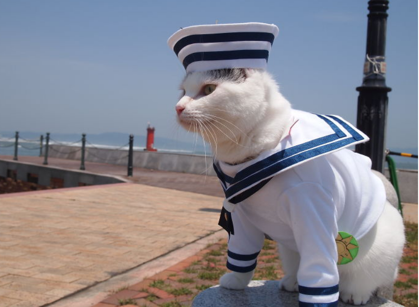 زي مميز لقط