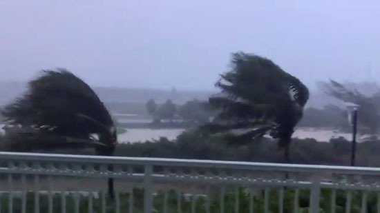تأثير  قوة الرياح على الأشجار