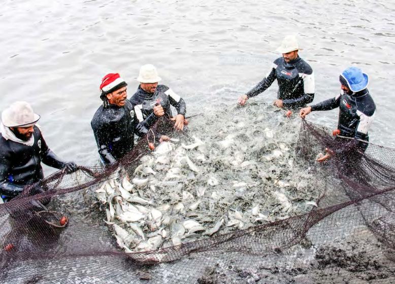 مشروع الاستزرع السمكى (3)