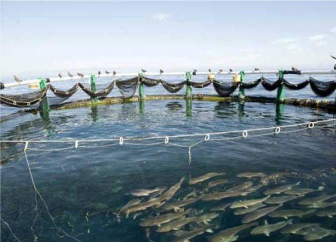 مشروع الاستزراع السمكى بقناة السويس (1)