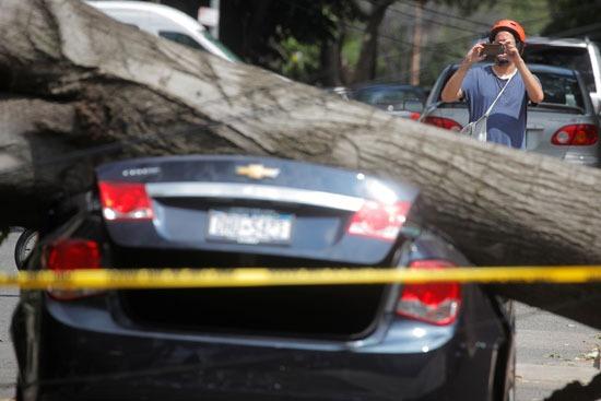 سقوط الأشجار على السيارات