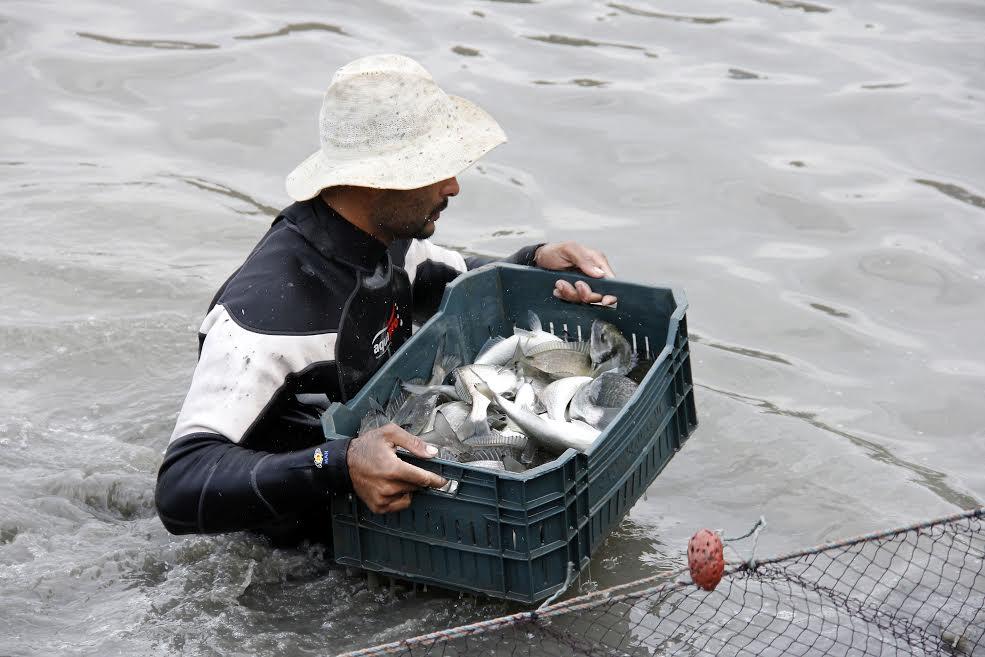 مشروع الاستزراع السمكى بقناة السويس (2)