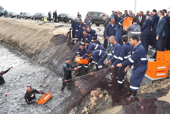 مشروع الاستزراع السمكى بقناة السويس (3)