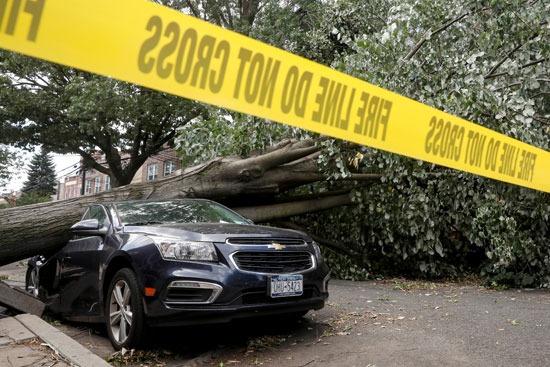 سقوط الأشجار (2)