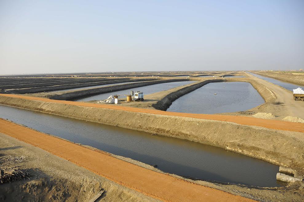 مشروع الاستزراع السمكى بقناة السويس (4)