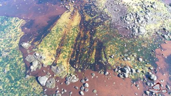 التلوث النفطى