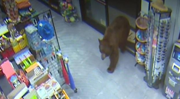 صورة أخرى لدخول الدب إلى السوبر ماركت