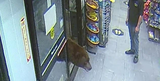 الدب يقتحم سوبر ماركت فى ولاية كاليفورنيا1