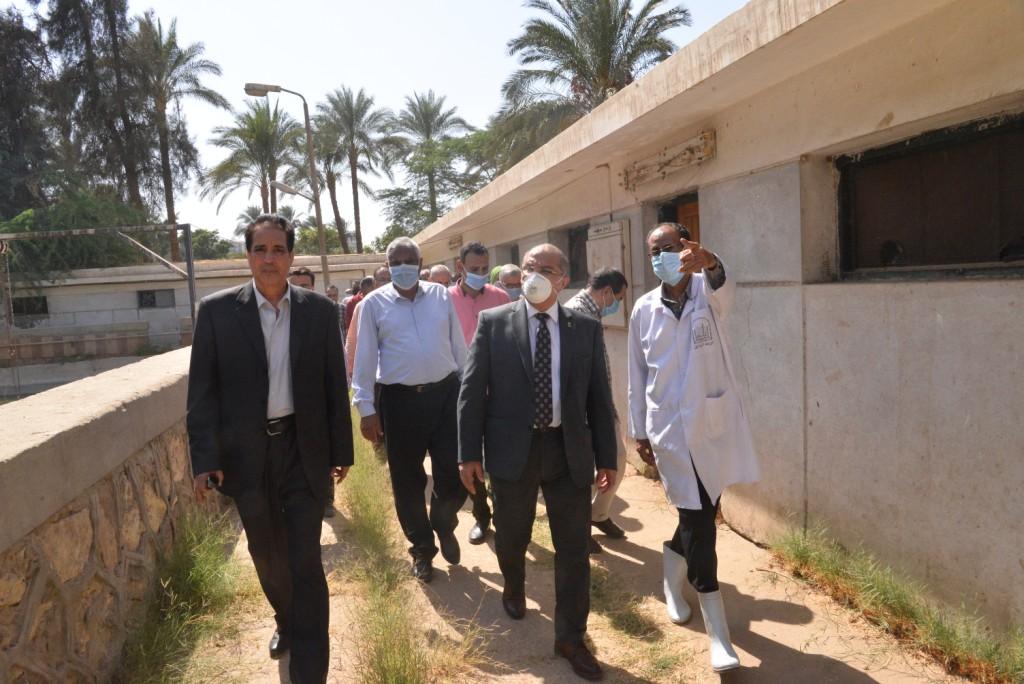 رئيس الجامعة خلال زيارته لمزارع الدواجن والماشية  (7)