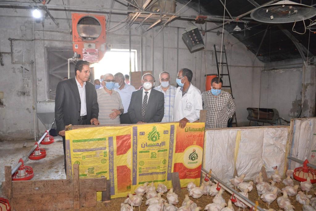 رئيس الجامعة خلال زيارته لمزارع الدواجن والماشية  (5)