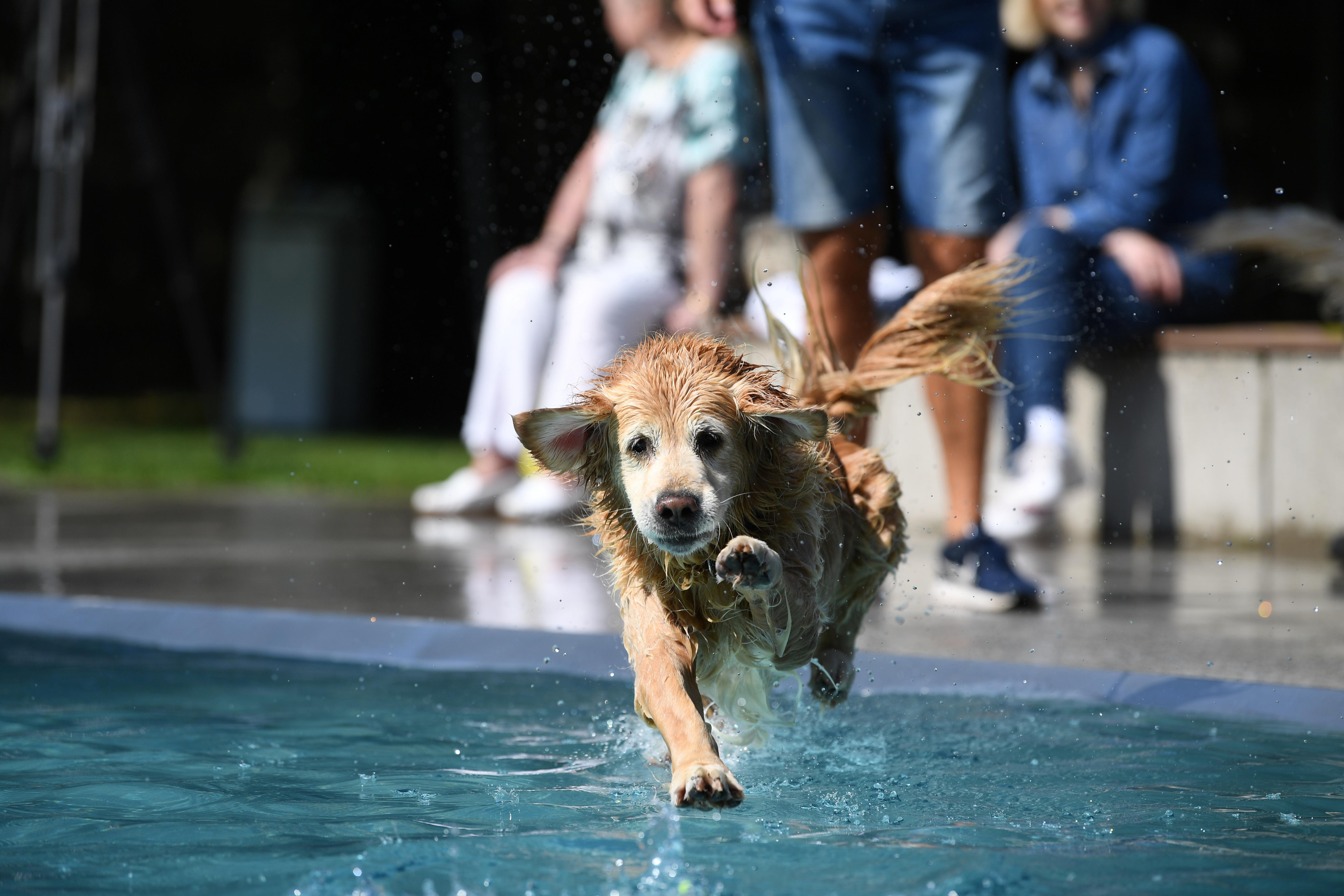 القفز فى المياه
