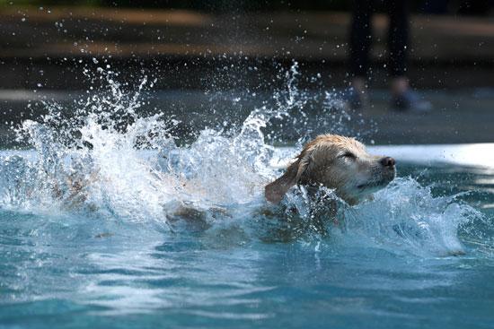 كلب يسبح فى المياه