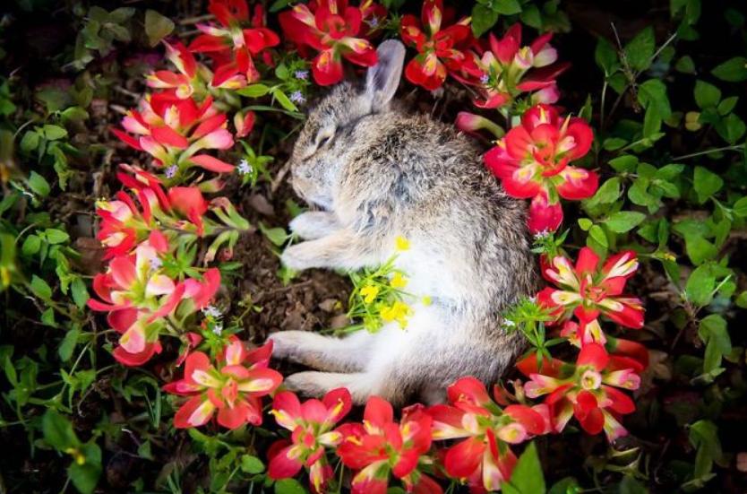 أرنب ميت
