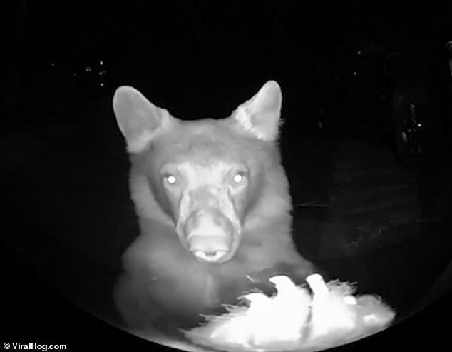 الدب أمام كاميرا المراقبة