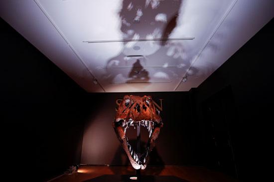 الديناصور العملاق ستتراوح قيمته بين 6 و8 ملايين دولار