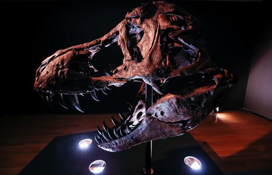الهيكل العظمى للديناصور