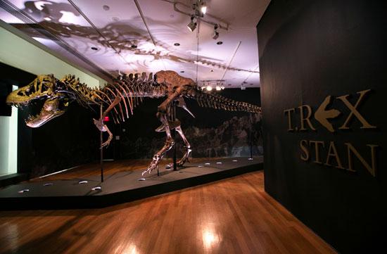 توقعات بإقبال كبير لاقتناء الهيكل العظمى للديناصور