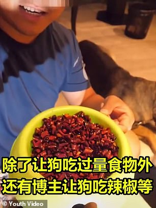 كلب يبكى بعد اجبار صاحبه تناول طعام بالفلفل الحار (1)
