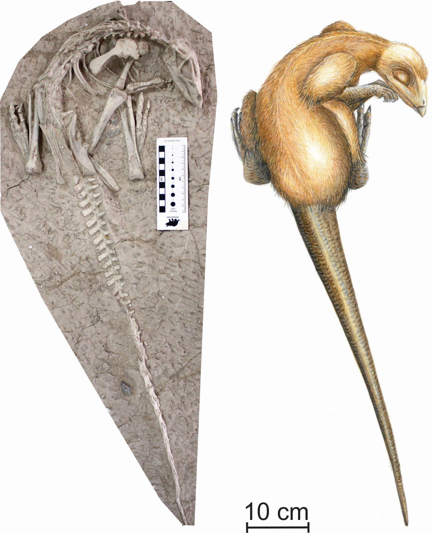 العثور على ديناصورين (2)
