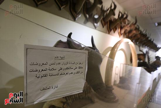 قصر محمد على بالمنيل (28)
