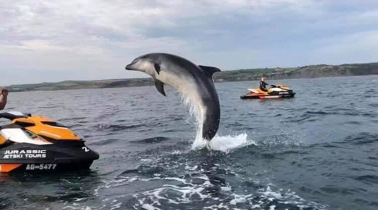 الدلفين دانى  (3)