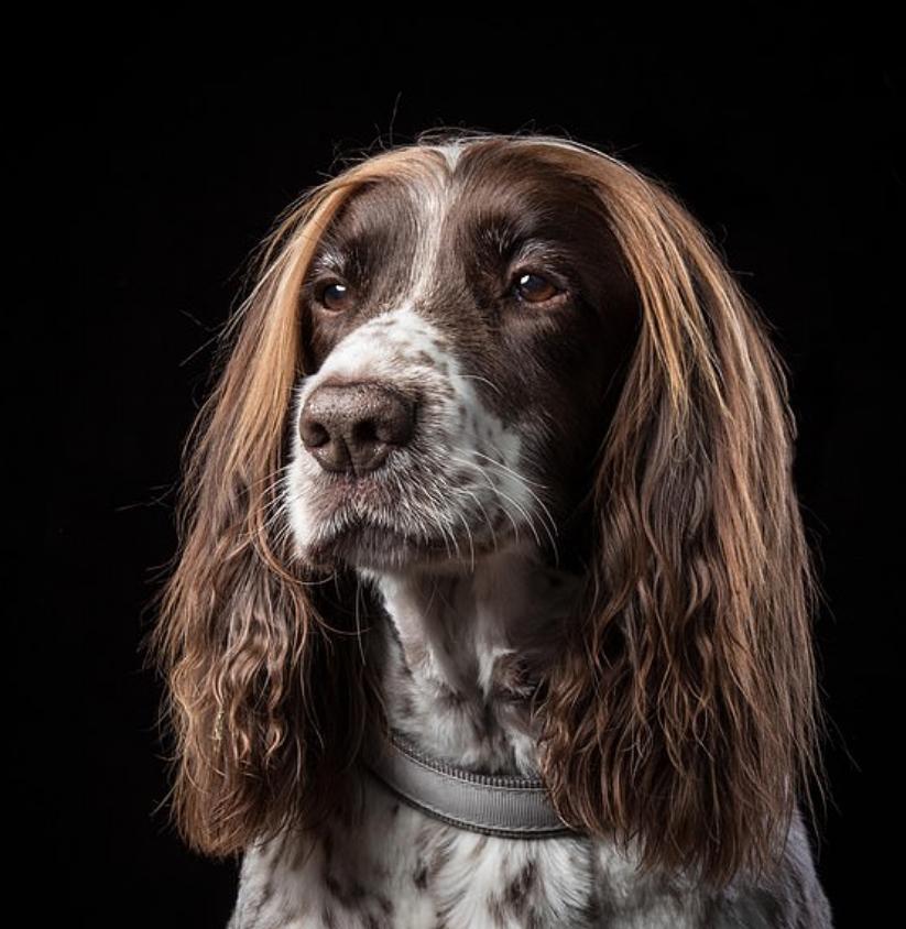 شعر الكلب جيرى