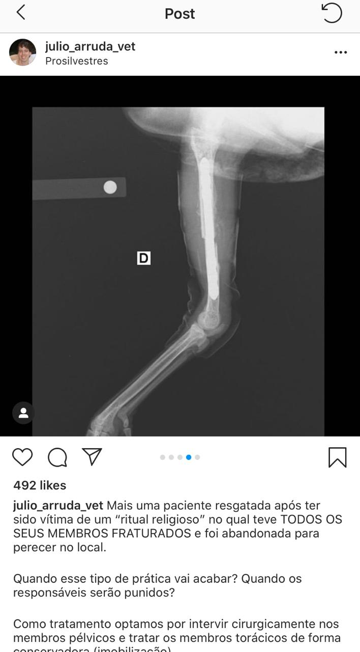 طبيب برازيلي يكذب اجراء عملية جراحية لفرخة البحر الأحمر بـ 7 ألاف جنية (3)