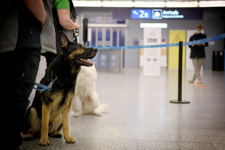 133-231057-dogs-discove-infected-corona-virus-finland-airport-2