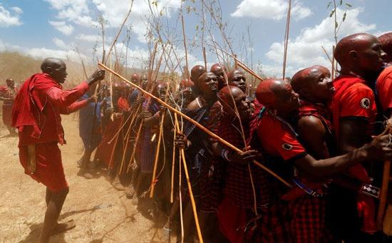 شعب الماساي شبه الرحل في كينيا ويزيد عددهم عن أربعين قبيلة