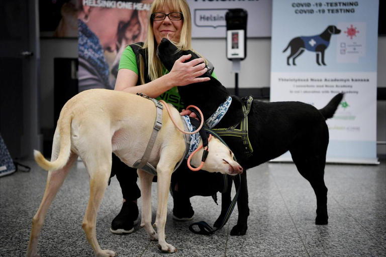 133-231057-dogs-discove-infected-corona-virus-finland-airport-3